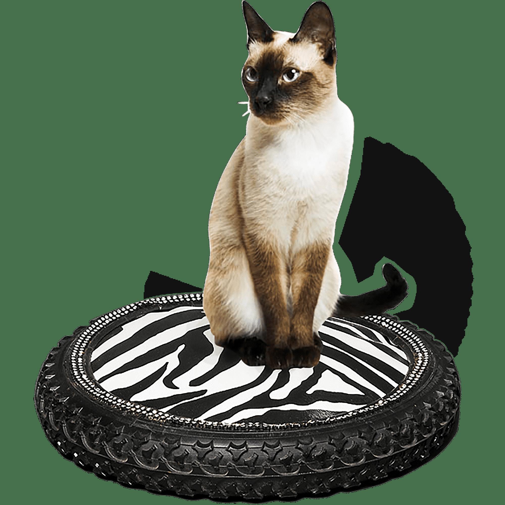 Daniela DAUDE artiste Conception de mobilier haut de gamme pour animaux Création artistique unique fait main Plein d'idées cadeau pour chat chien chihuahua