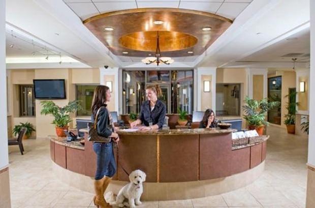 Hotel de luxe pour animaux