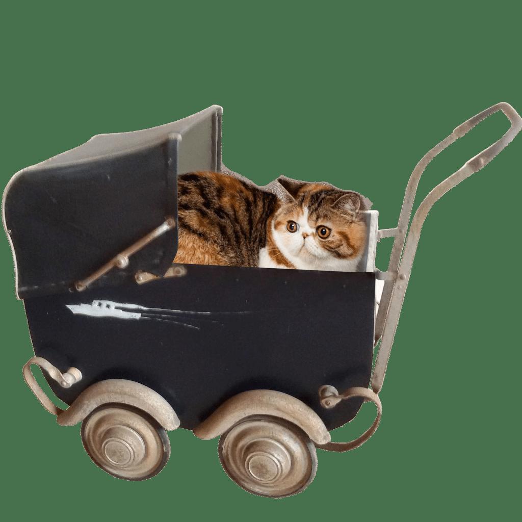 accessoire chat design accessoires de luxe pour animaux. Black Bedroom Furniture Sets. Home Design Ideas