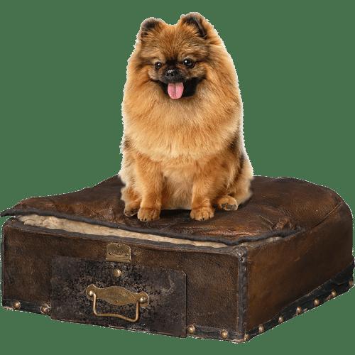 Accessoires pour chien de luxe Chancelière XVIIIe