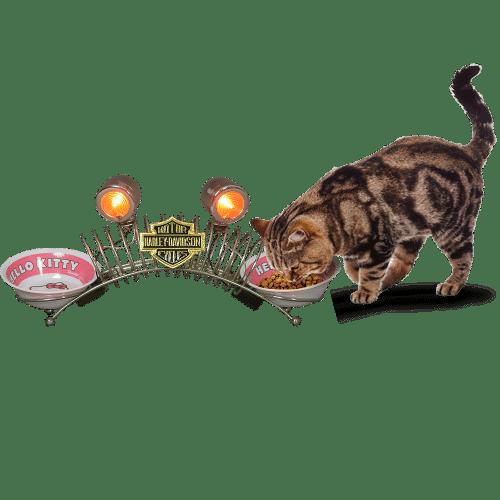 Objet harley davidson pour accessoire animaux insolite for Objet deco animaux