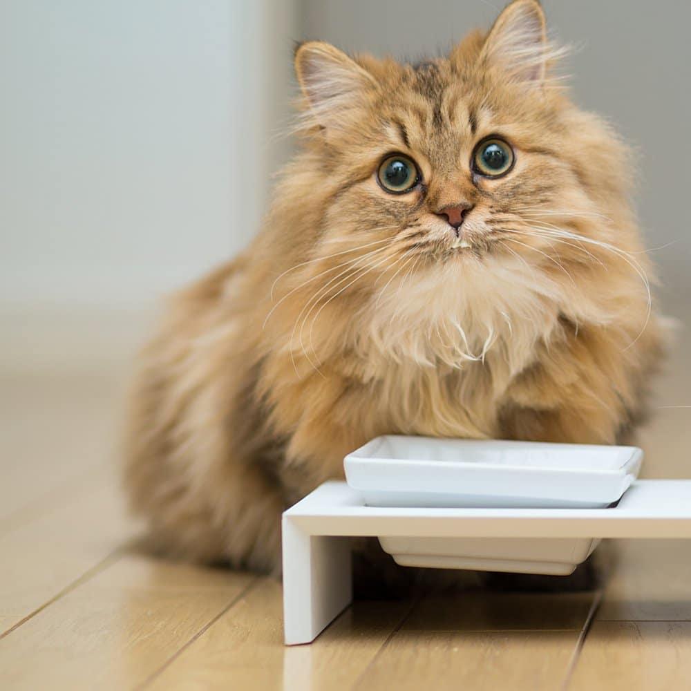 ou placer la gamelle d 39 un chat atelier du loft meuble design pour animal. Black Bedroom Furniture Sets. Home Design Ideas